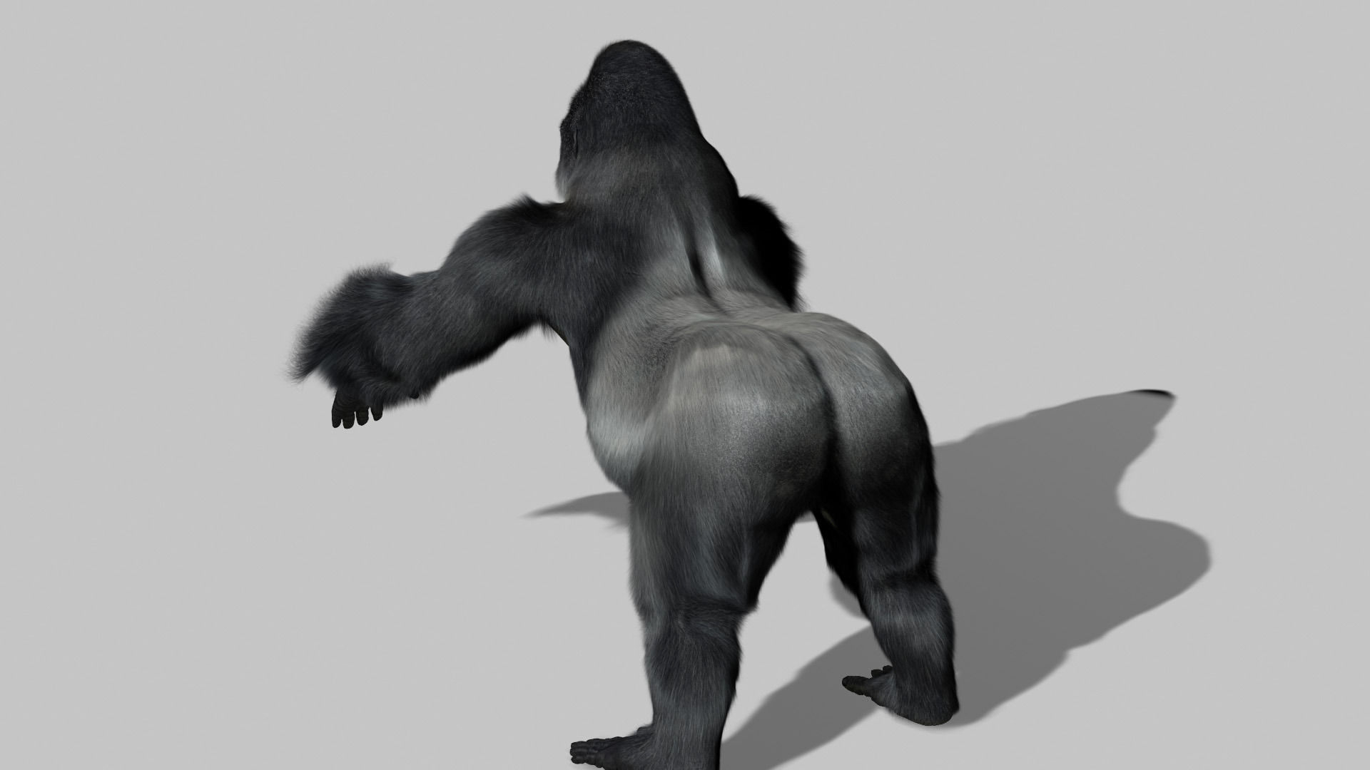 Gorilla 3D model Rigged and Animated